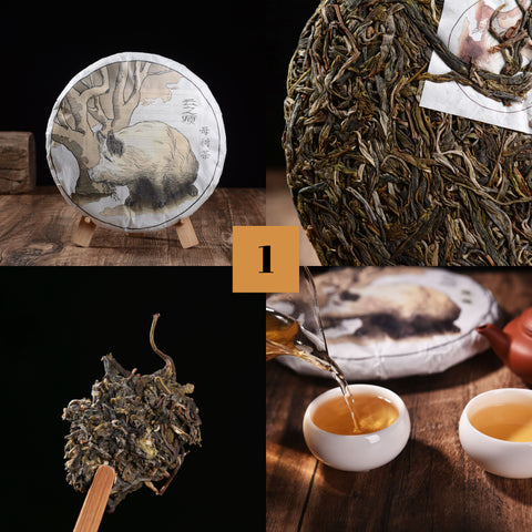 "2019 Yunnan Sourcing ""Autumn Lincang"" Raw Pu-erh Tea Sampler * Part 1"