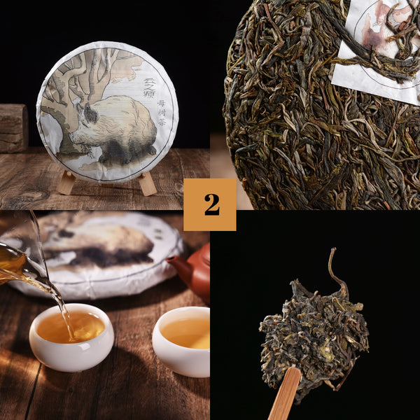 "2019 Yunnan Sourcing ""Autumn Lincang"" Raw Pu-erh Tea Sampler * Part 2"