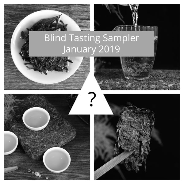 Hunan Fu Cha Blind Tasting - 5 Different Producers - January 2019