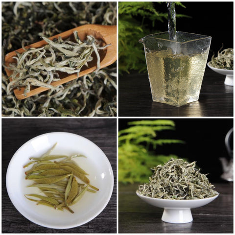 "Yunnan ""First Flush"" Spring 2019 Green Tea Sampler"