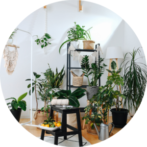 The corner of a home is filled with a variety of indoor plants that are placed across shelving, step stools, and hanging baskets as they will the room with lively greenery.