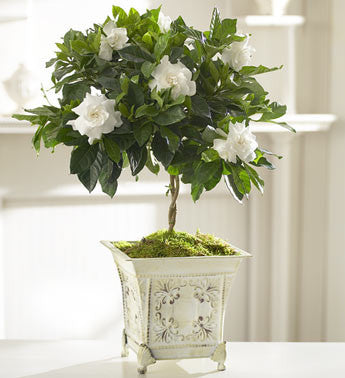 Graceful Gardenia Topiary