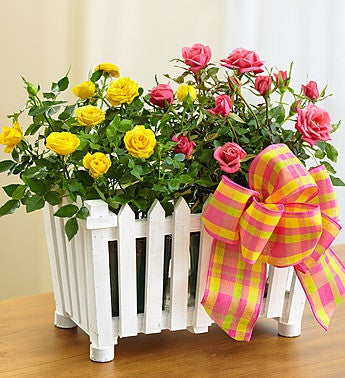Country Rose Picket Fence Garden
