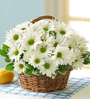 Pure Bliss Daisy Basket