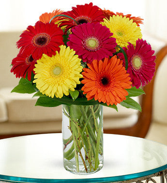 Multi-Color Gerbera Display