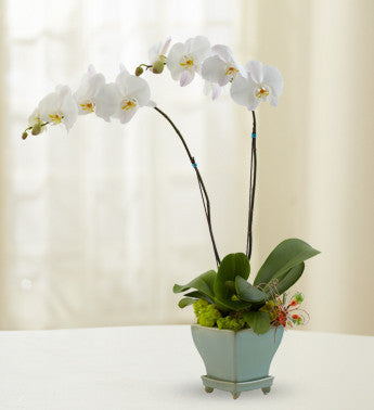 Exquisite Orchids