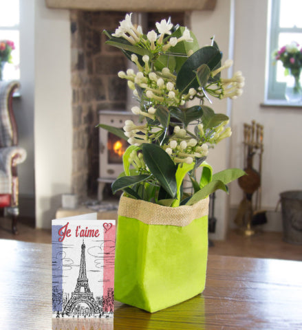 Stephanotis Gift Bag