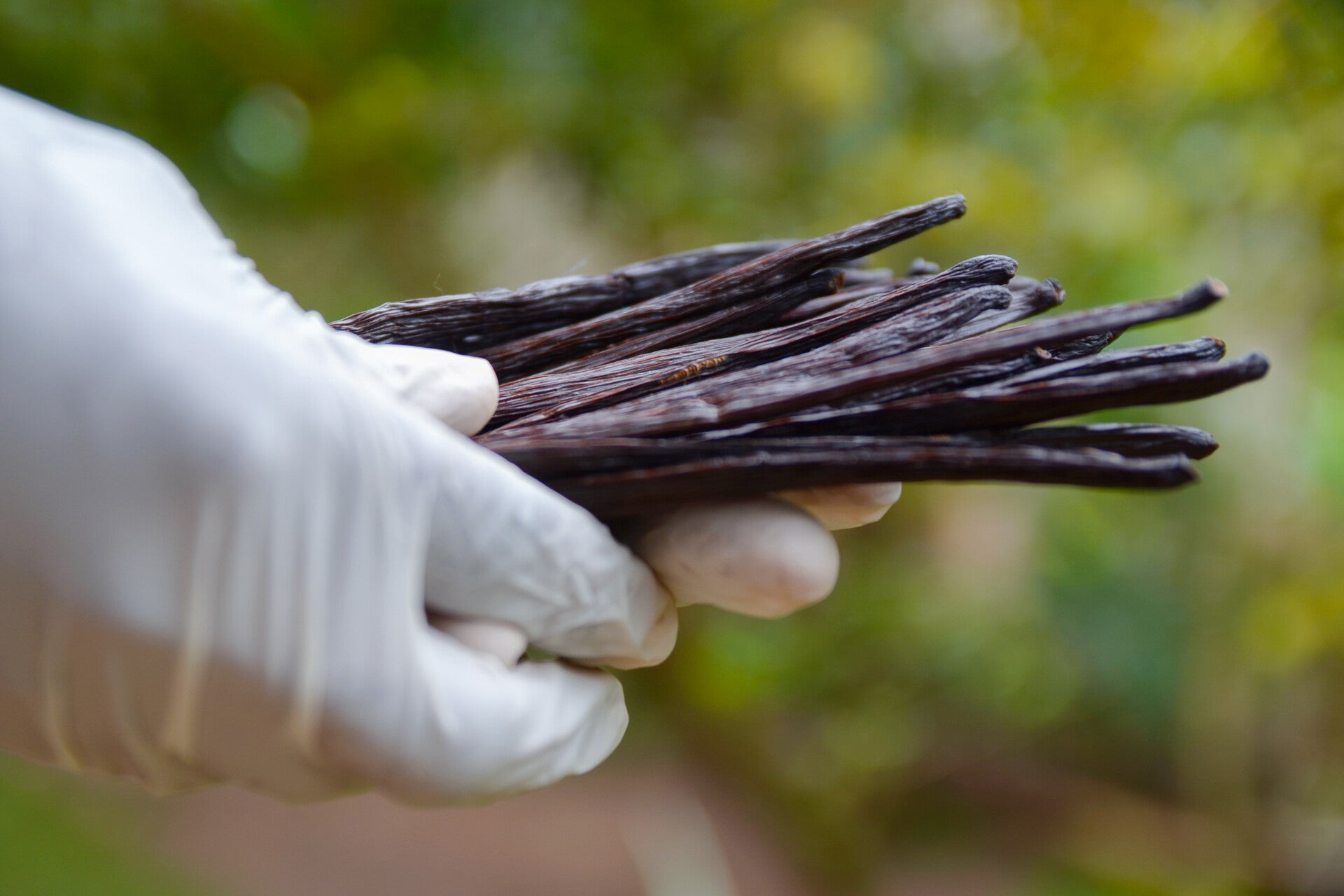 Why Our Vanilla?