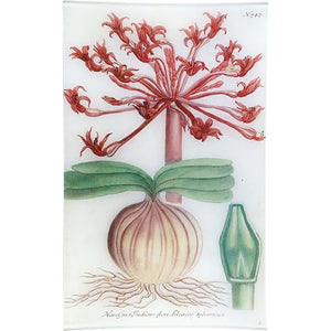 https://www.janeleslieco.com/products/john-derian-n-747-indian-amaryllis