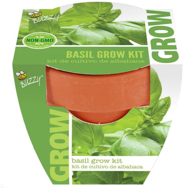 Buzzy Non-GMO 100% Natural Seed Mini Terra Cotta Basil Grow Kit with Instruction Guide