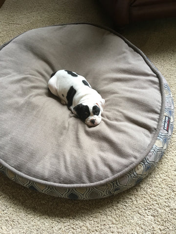 Sonny as a pup in his big bed