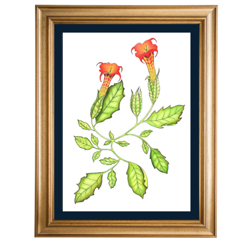 Angel Trumpet Original Illustration - Colour