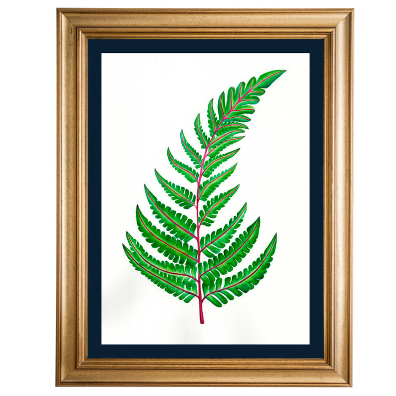 Fern Original Illustration - Colour