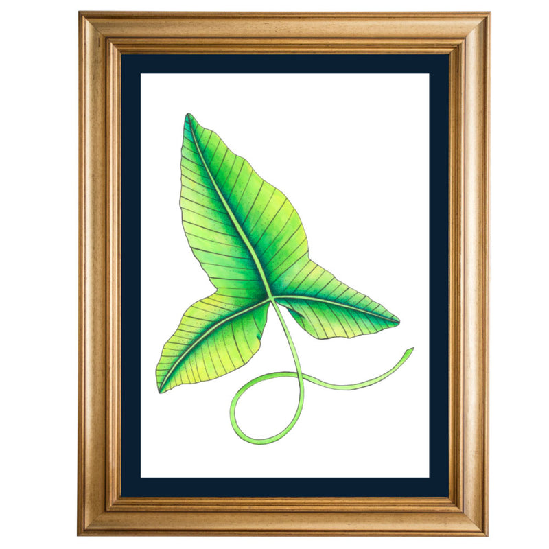 Rainforest Leaf 1 Original Illustration - Colour