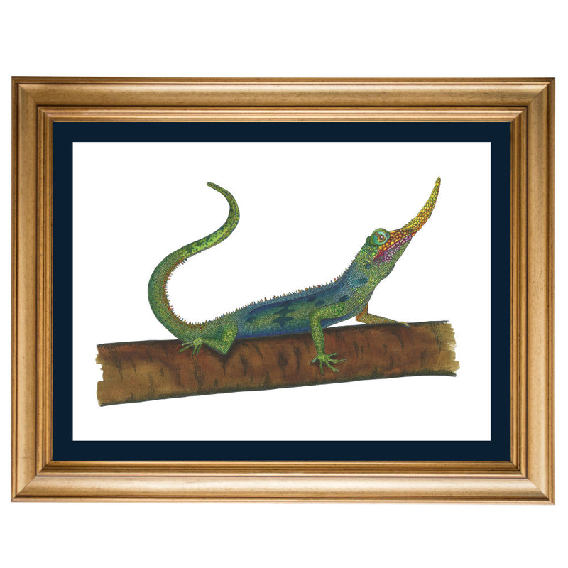 Pinocchio Lizard Original Illustration - Colour
