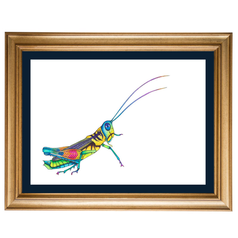 Rainbow Grasshopper Original Illustration - Colour