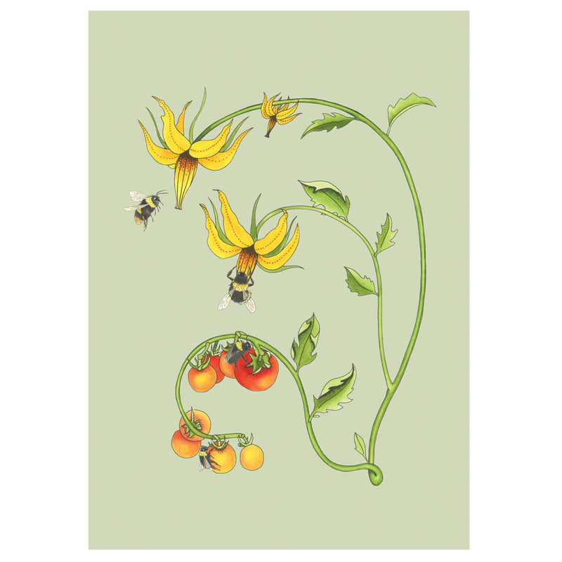 Bee and Tomato Plant Art Print