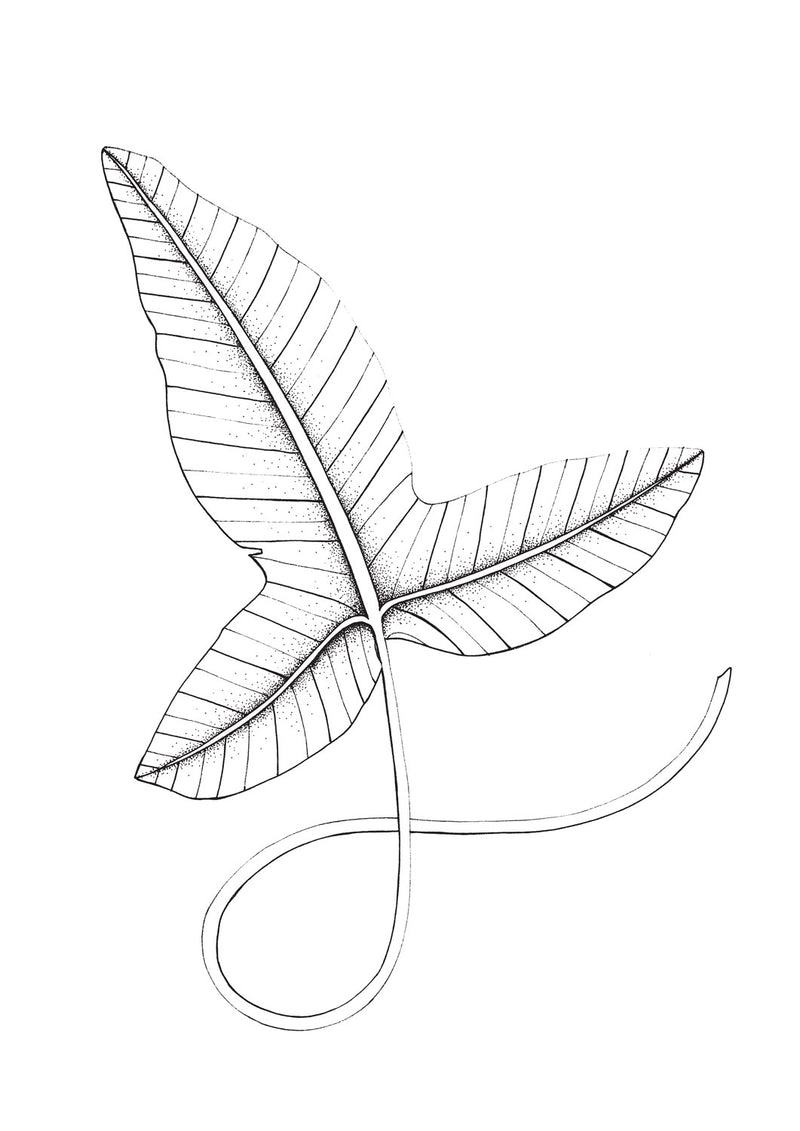 Rainforest Leaf 2 Original Illustration - B&W