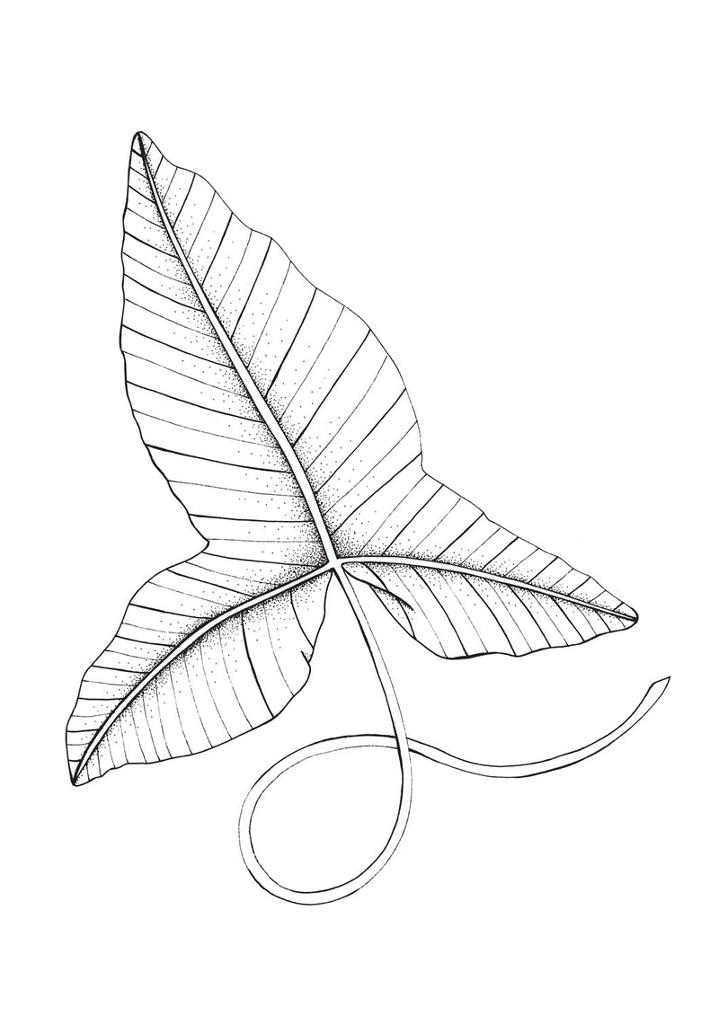 Rainforest Leaf 1 Original Illustration - B&W