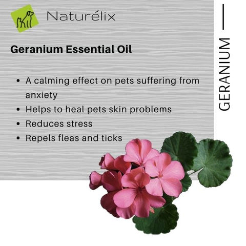 benefits of Geranium for dog skin dog skin issues why does my dog get rashes why does my dog scratch often best dog shampoo for itchy skin issues  dog shampoo shampoo for dogs online india indian dog shampoo made in india dog shampoo sustainable natural ingredients shampoo for puppies dog shampoo for spa dog shampoo for skin issues hair control dog shampoo best shampoo for dogs in india naturelix conditioner natural dog shampoo shampoo for beagles dog shampoo for shih tzu which is the best shampoo for dogs in india