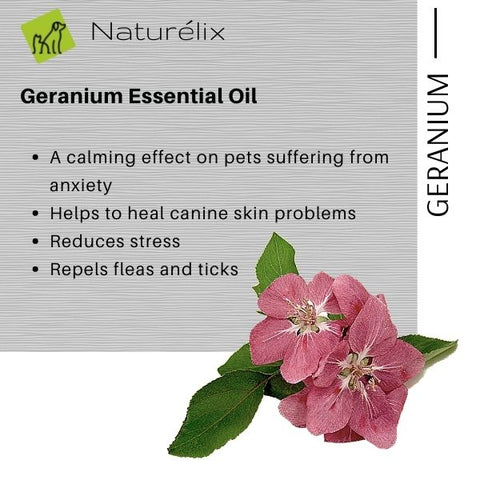 Natural Defense from Ticks & Fleas Safe and pure Clary Sage essential oil offers a pleasant aroma and natural anti-fungal and anti-bacterial properties.