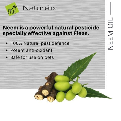 benefits of neem oil for dog skin dog skin issues why does my dog get rashes why does my dog scratch often best dog shampoo for itchy skin issues  dog shampoo shampoo for dogs online india indian dog shampoo made in india dog shampoo sustainable natural ingredients shampoo for puppies dog shampoo for spa dog shampoo for skin issues hair control dog shampoo best shampoo for dogs in india naturelix conditioner
