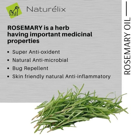 benefits of Rosemary for dog skin dog skin issues why does my dog get rashes why does my dog scratch often best dog shampoo for itchy skin issues  dog shampoo shampoo for dogs online india indian dog shampoo made in india dog shampoo sustainable natural ingredients shampoo for puppies dog shampoo for spa dog shampoo for skin issues hair control dog shampoo best shampoo for dogs in india naturelix conditioner