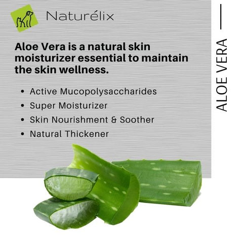benefits of aloe vera for dog skin dog skin issues why does my dog get rashes why does my dog scratch often best dog shampoo for itchy skin issues  dog shampoo shampoo for dogs online india indian dog shampoo made in india dog shampoo sustainable natural ingredients shampoo for puppies dog shampoo for spa dog shampoo for skin issues hair control dog shampoo best shampoo for dogs in india naturelix conditioner natural dog shampoo shampoo for beagles dog shampoo for shih tzu which is the best shampoo for dogs in india