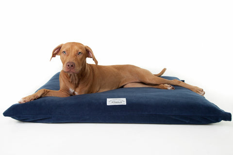 Henry Hottie Cotton Drill Bed Mattress & Cover