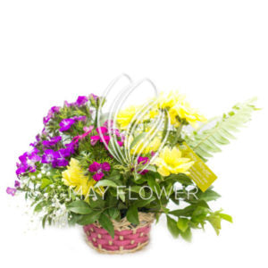 Mini Summer special Flowers