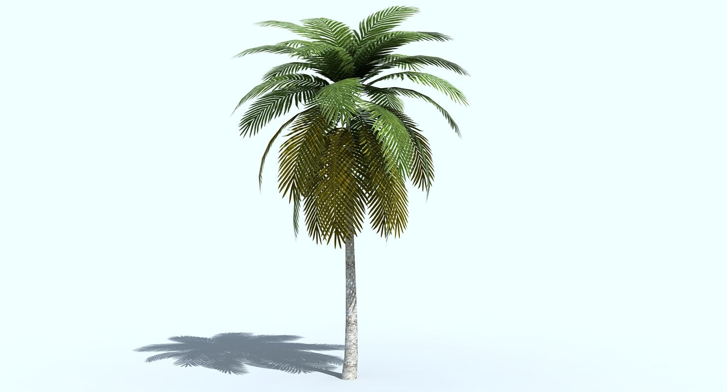 Palm Tree 3D model - WireCASE