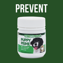 best mussel supplement for puppies