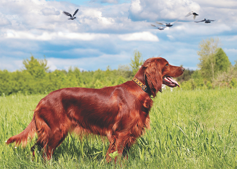 omega 3 for dogs
