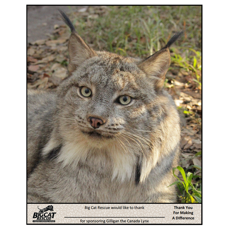 Download - Canada Lynx Sponsorship