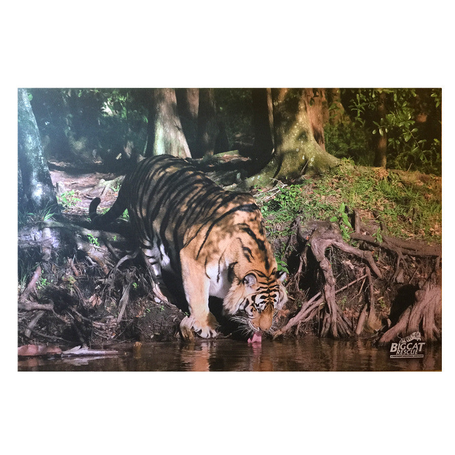 Canvas Photo Art - Tiger Lakeside