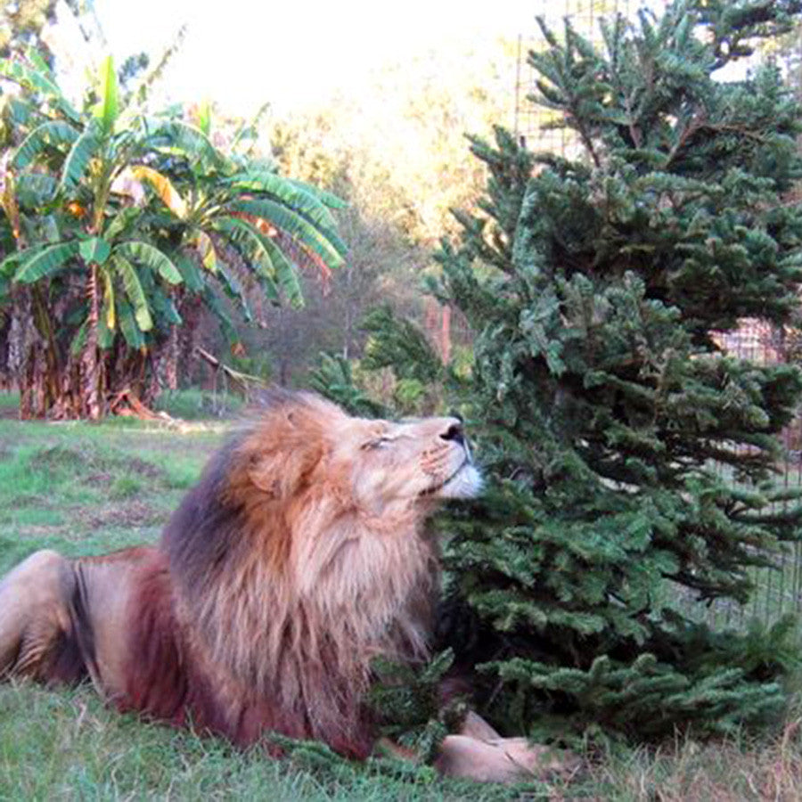 Donation - Christmas Tree Enrichment