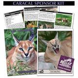 donate to adopt and save caracals by sponsoring