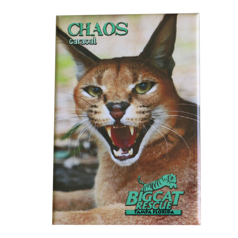 Magnet - Laminated Photo of Chaos the Caracal
