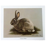 Print - Rabbit by Harold Rigsby