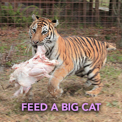Donation - Feed A Big Cat