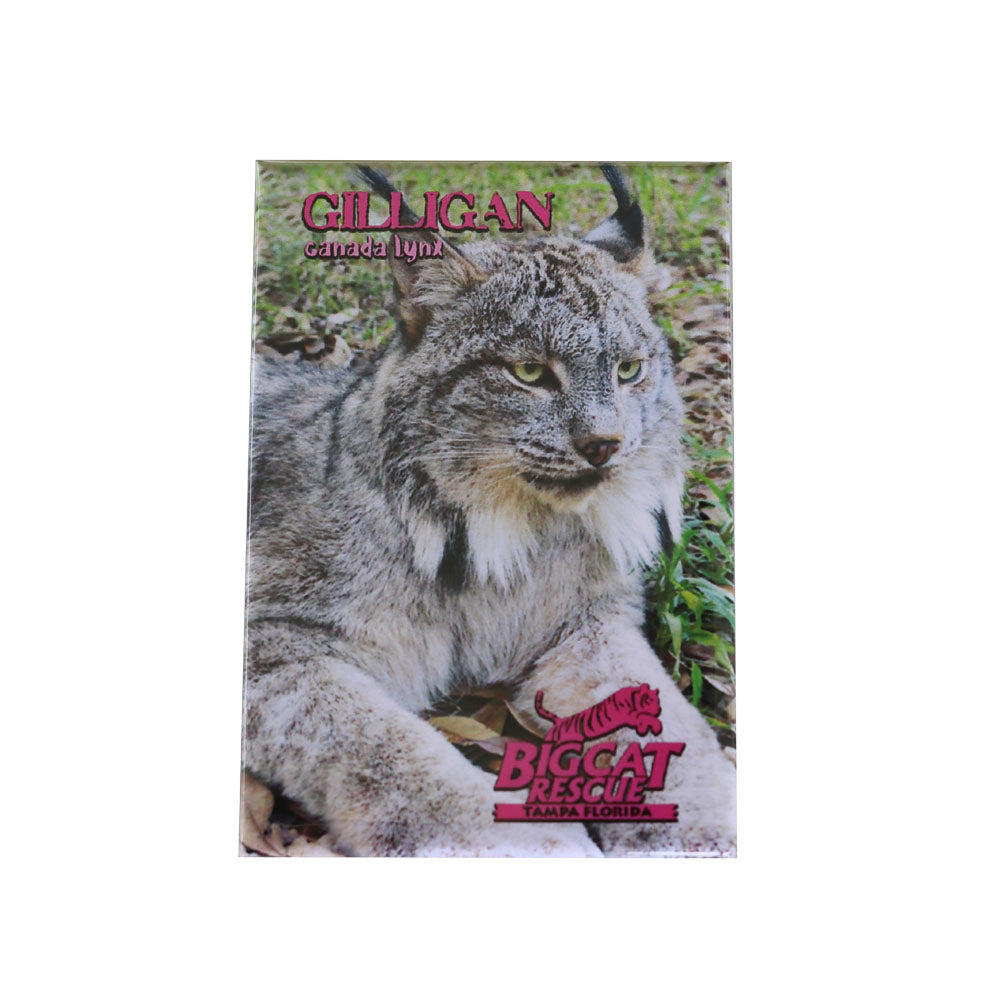 Magnet - Laminated Photo of Gilligan the Canada Lynx