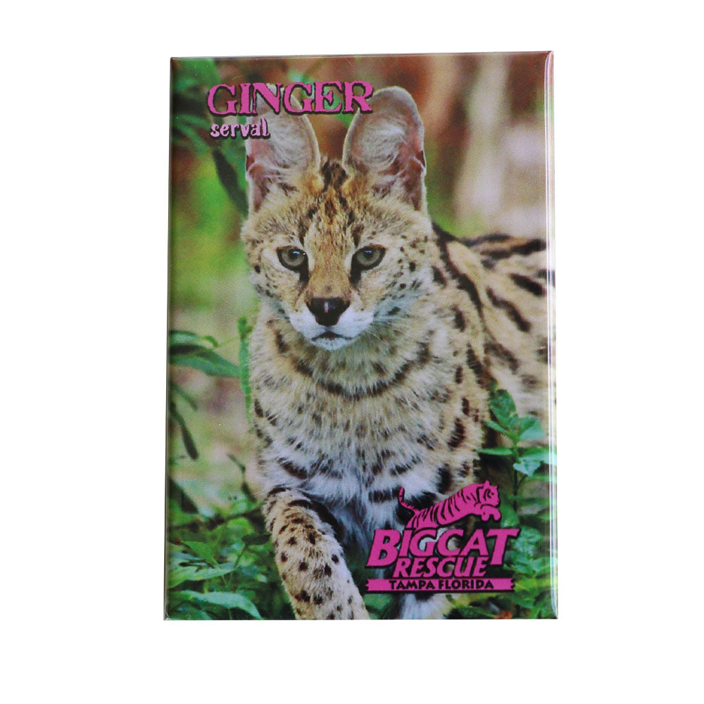 Magnet - Laminated Photo of Ginger the Serval