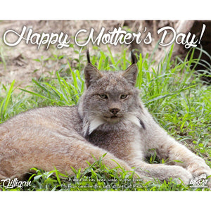 Download Mother's Day Big Cat Photo - Choose Your Big Cat