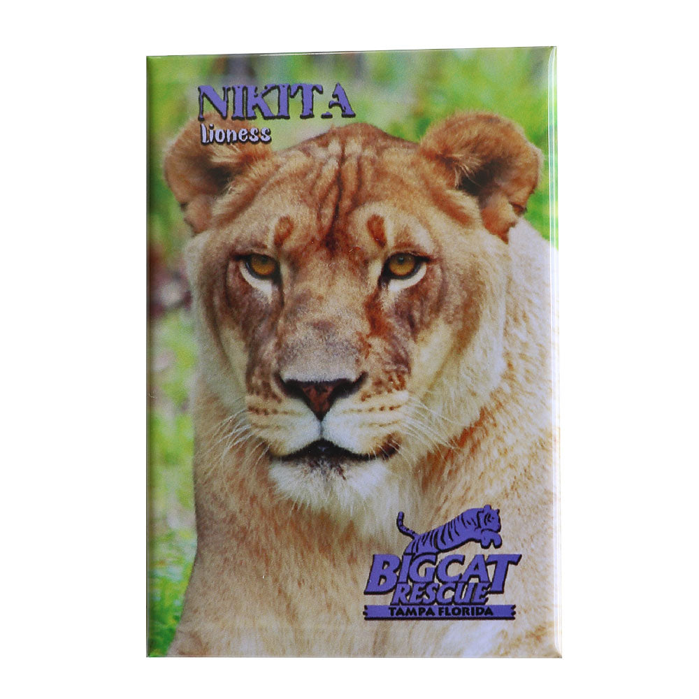 Magnet - Laminated Photo of Nikita Lioness
