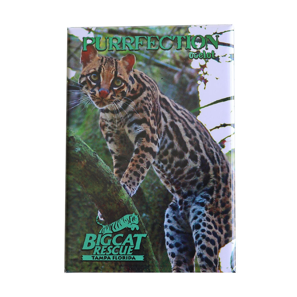 Magnet - Laminated Photo of Purrfection Ocelot