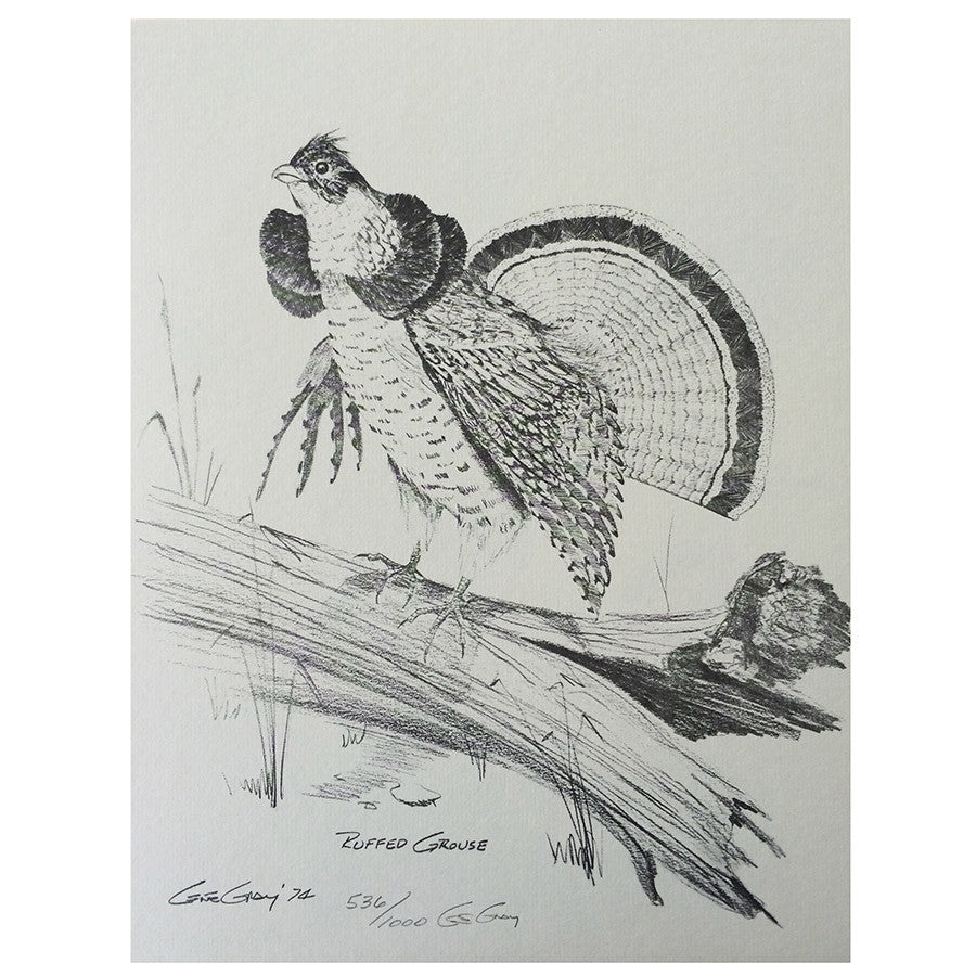 Print - Ruffed Grouse by Gene Gray