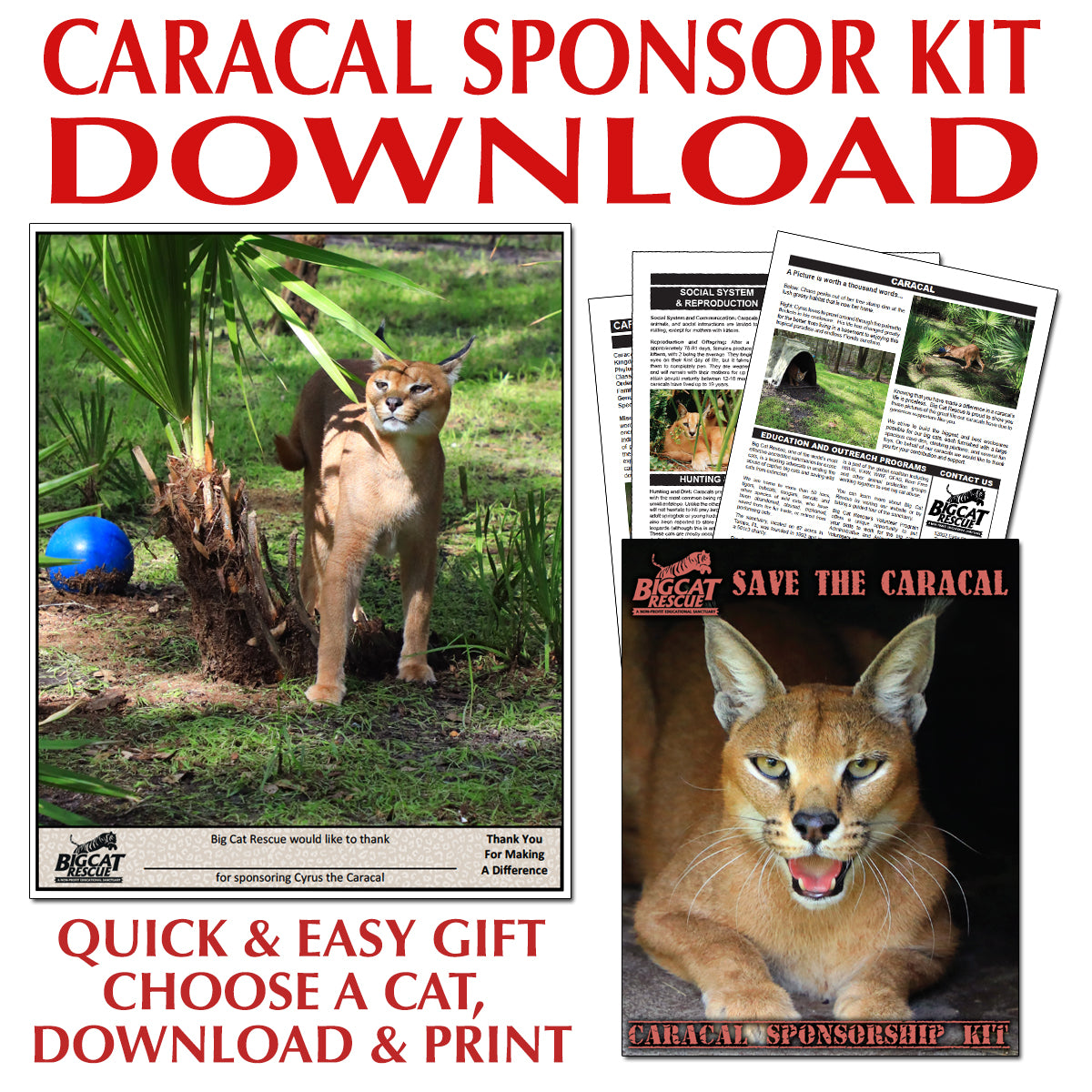 Download - Caracal Sponsorship