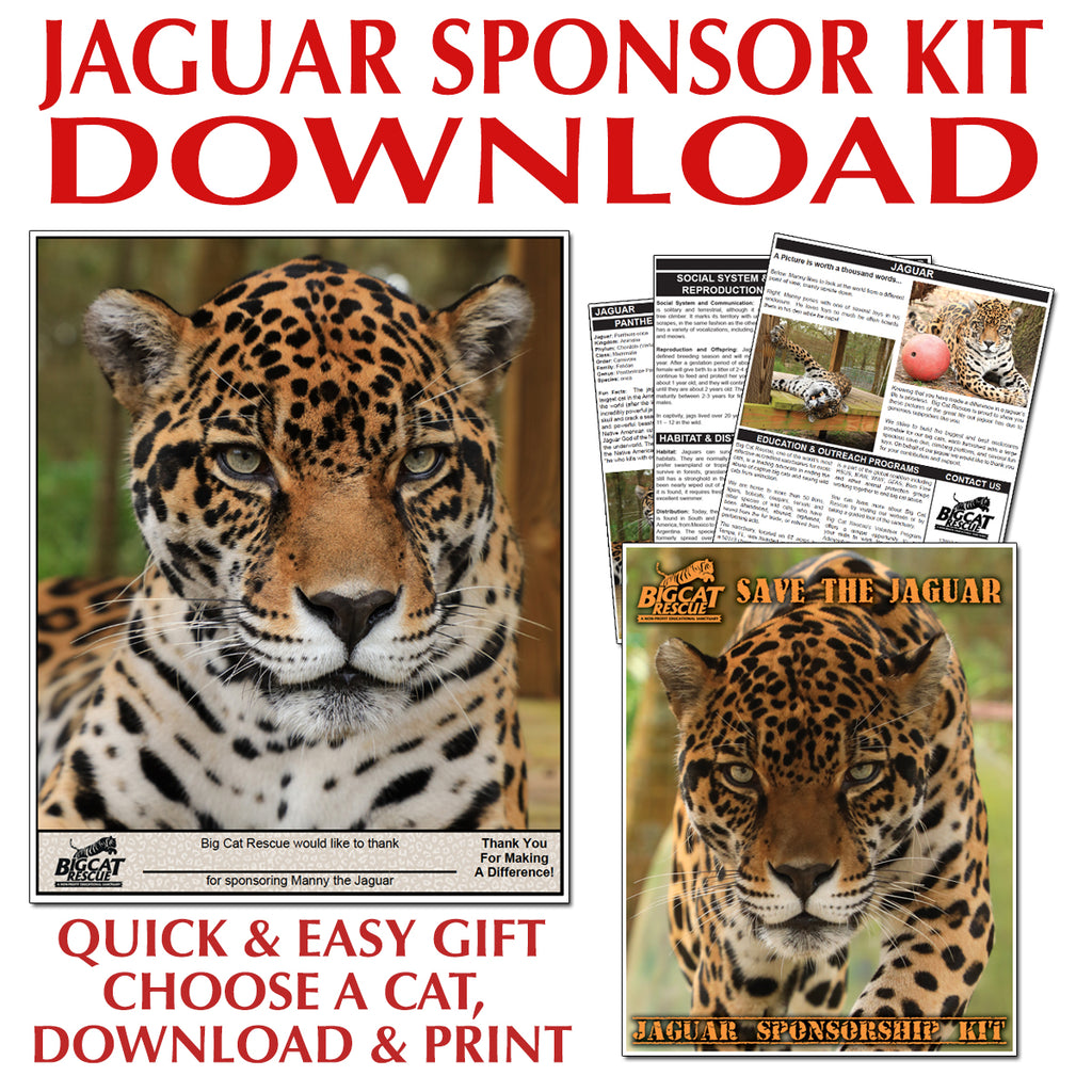 Download - Jaguar Sponsorship