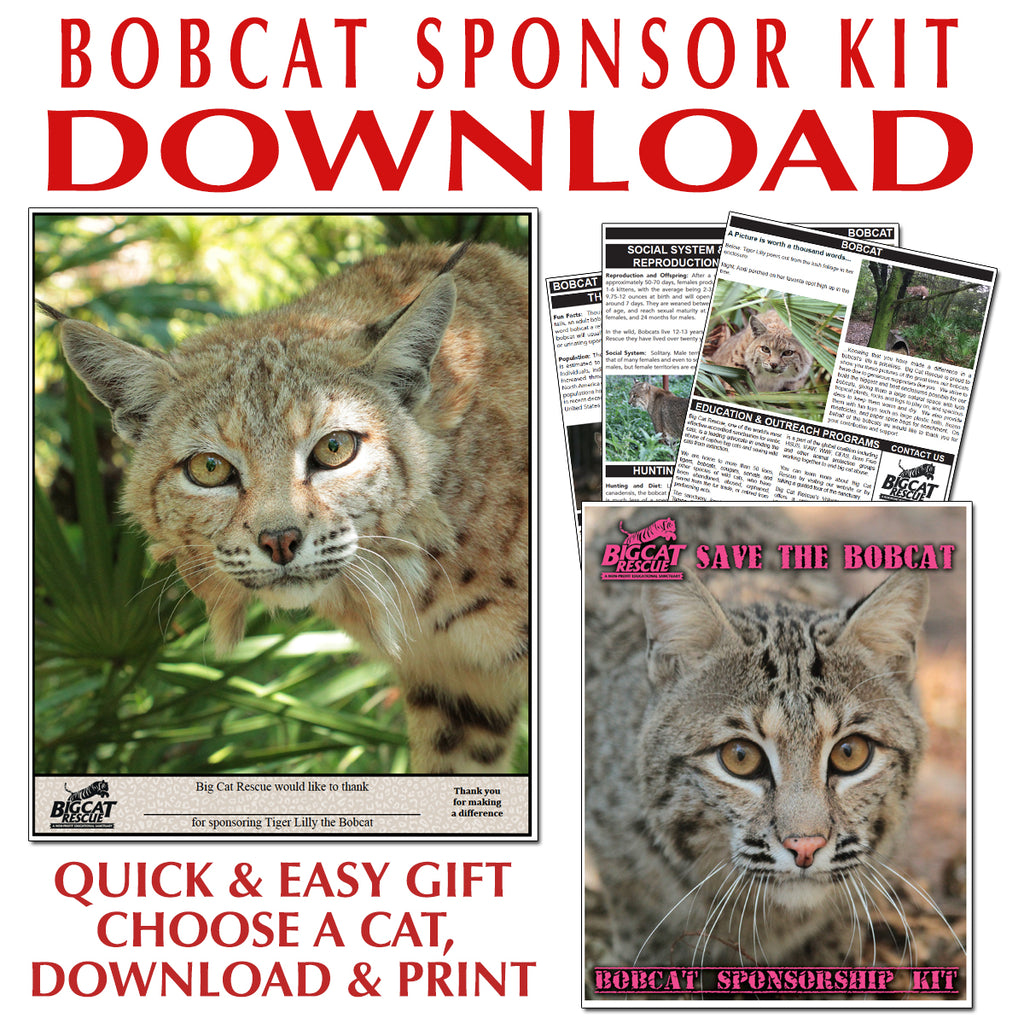 Download - Bobcat Sponsorship Named S-Z