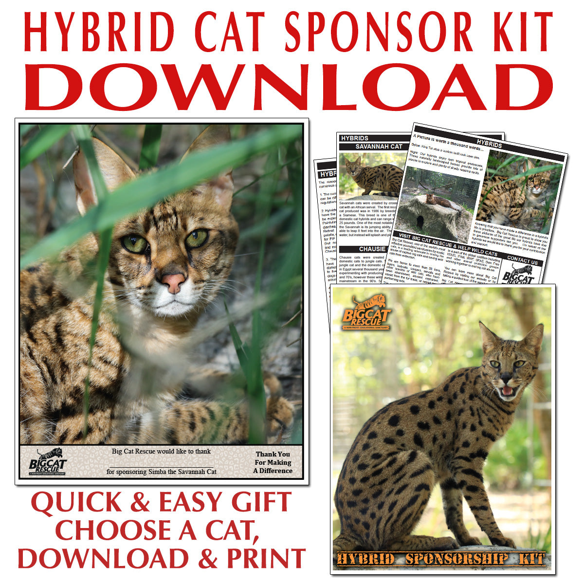 Download - Hybrid Sponsorship